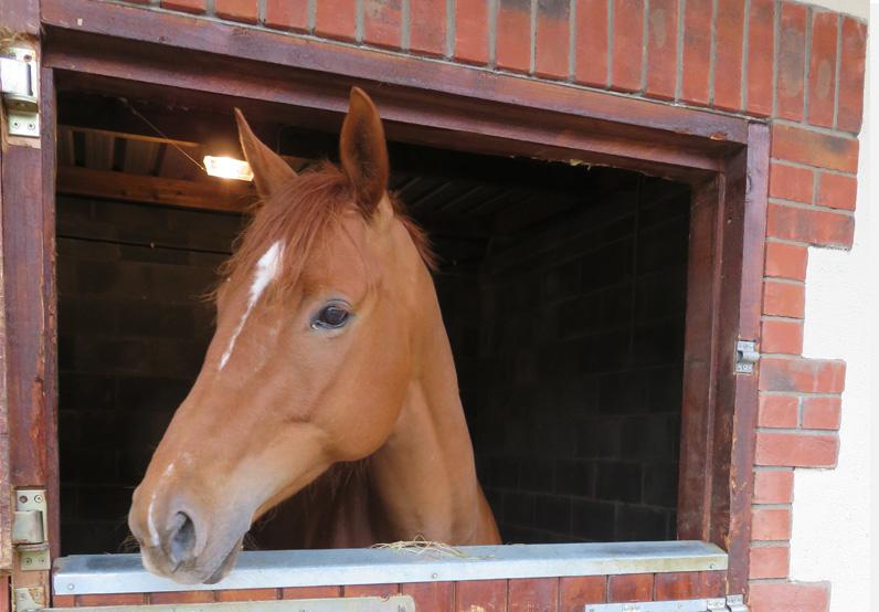 horse livery dublin